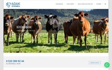 istanbuladak.com screenshot